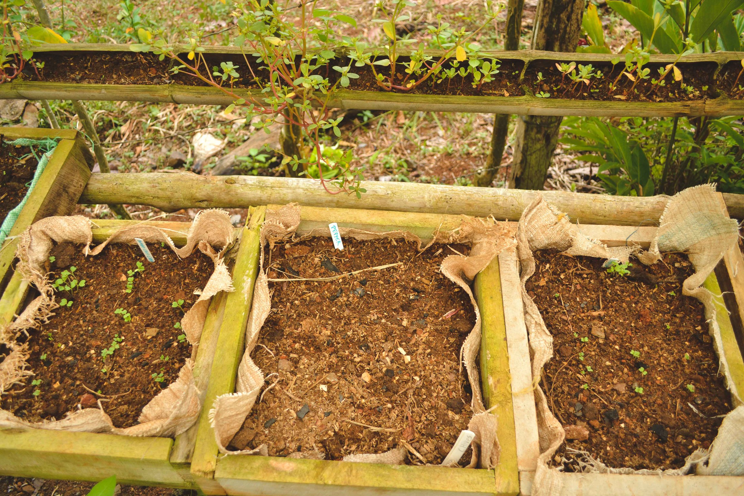 Wooden boxes hold starter seeds.