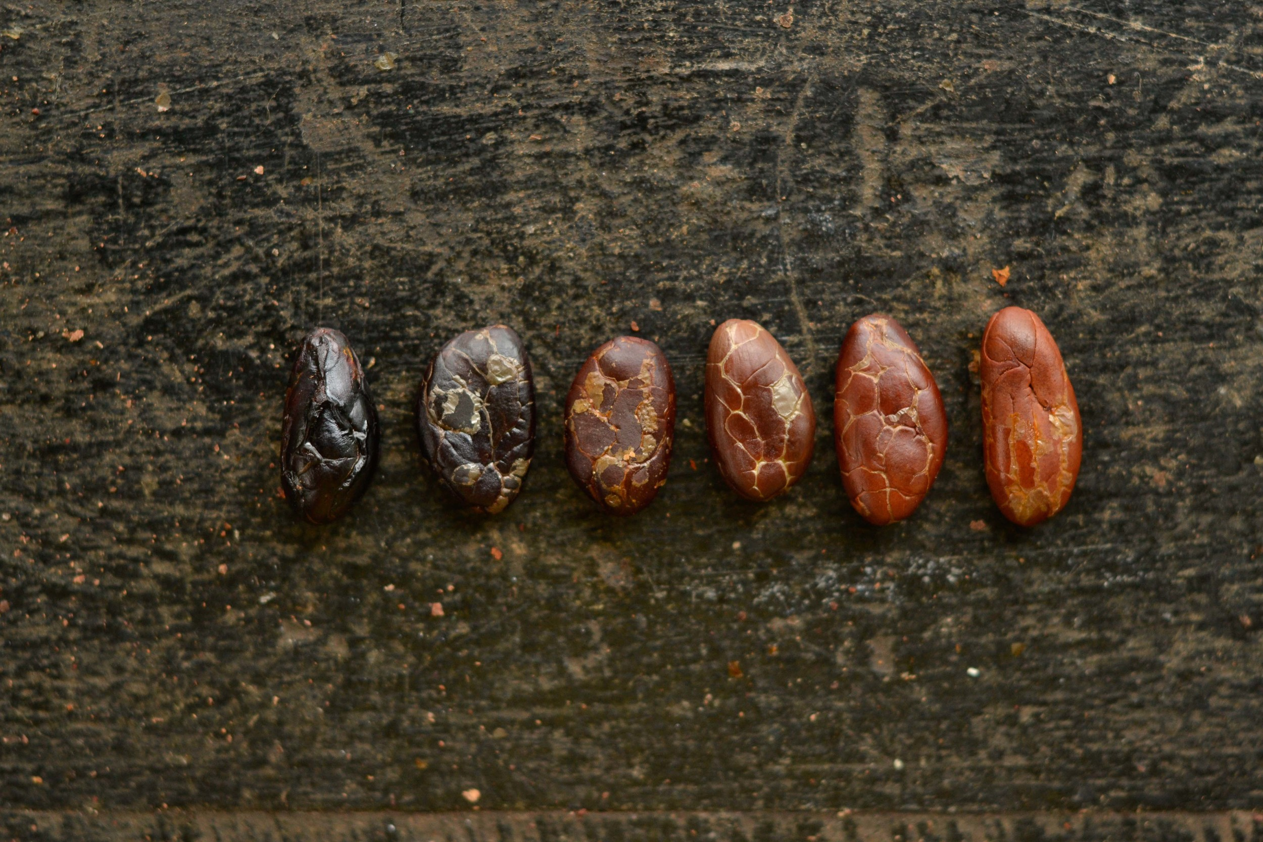 The spectrum of cacao colors is due to different types of cacao and varying fermentation durations