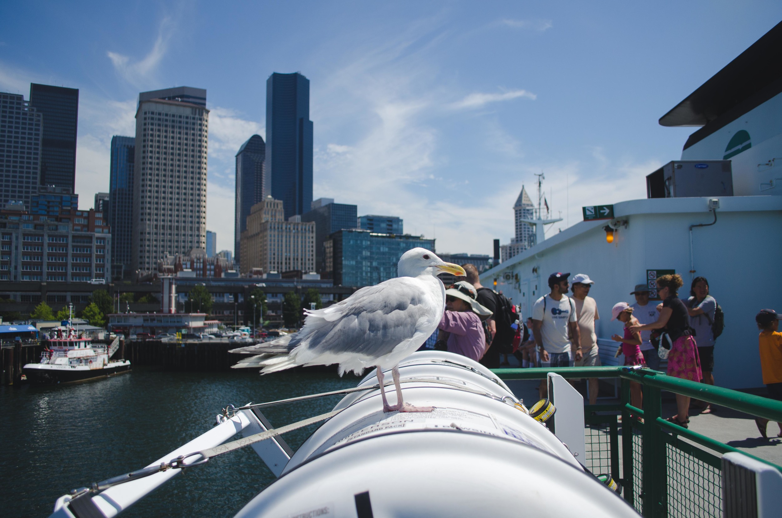 Ferry to Bainbridge!  This seagull guarded the life raft capsule en route.  The mark on the underside of its beak clearly marks its induction into the secret society of Avian Water Guards