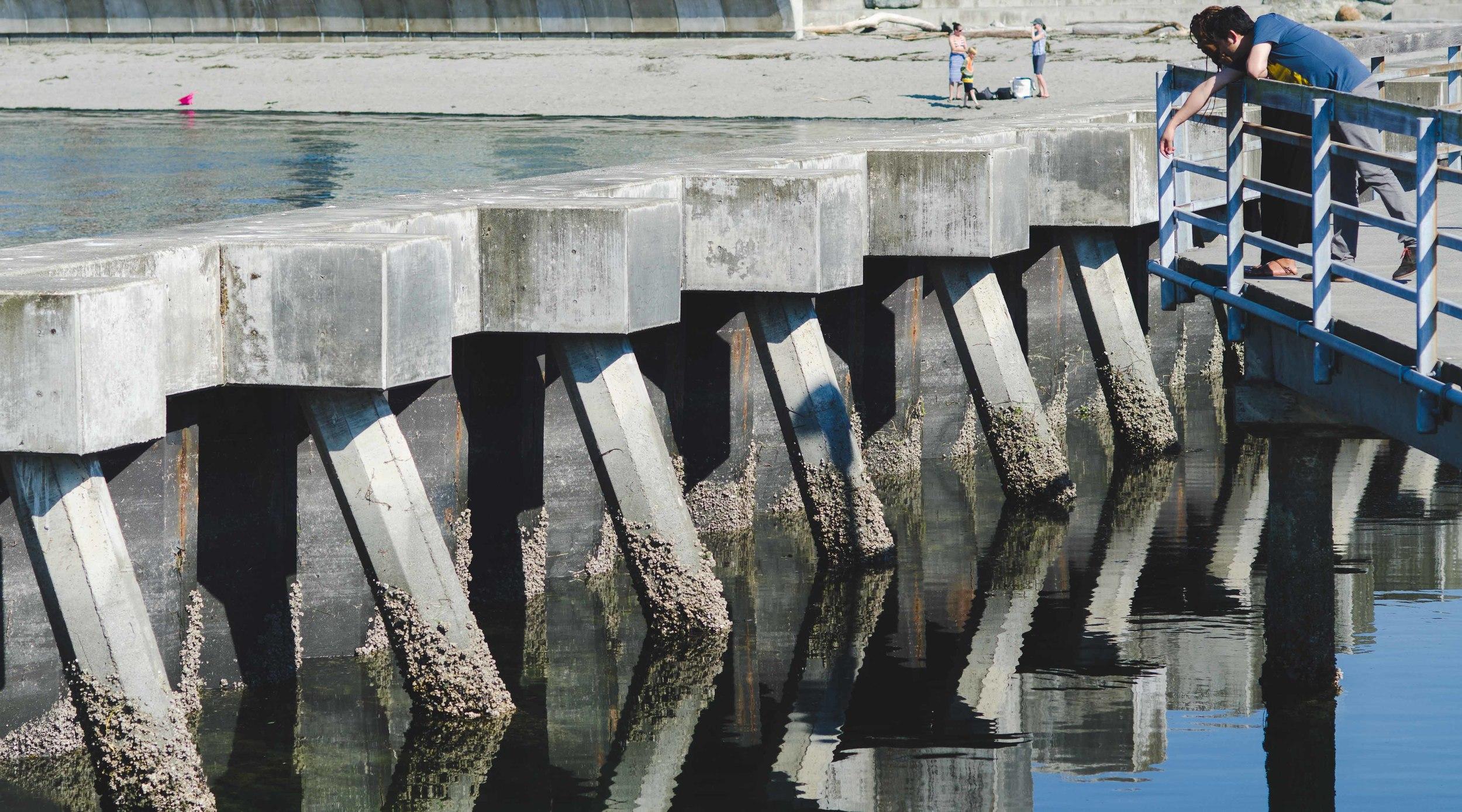Urchin-encrusted breakwater