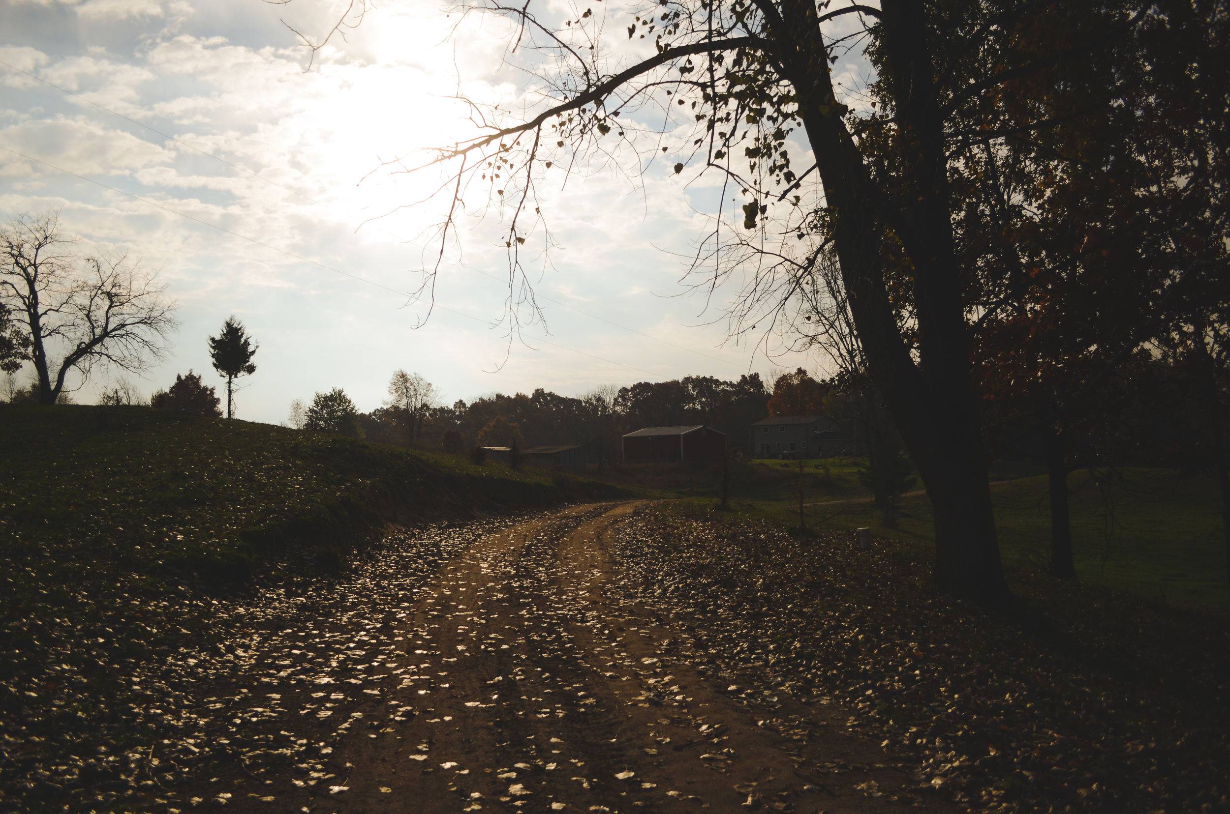 Beautiful fall morning as we walk to the farm from the volunteer house