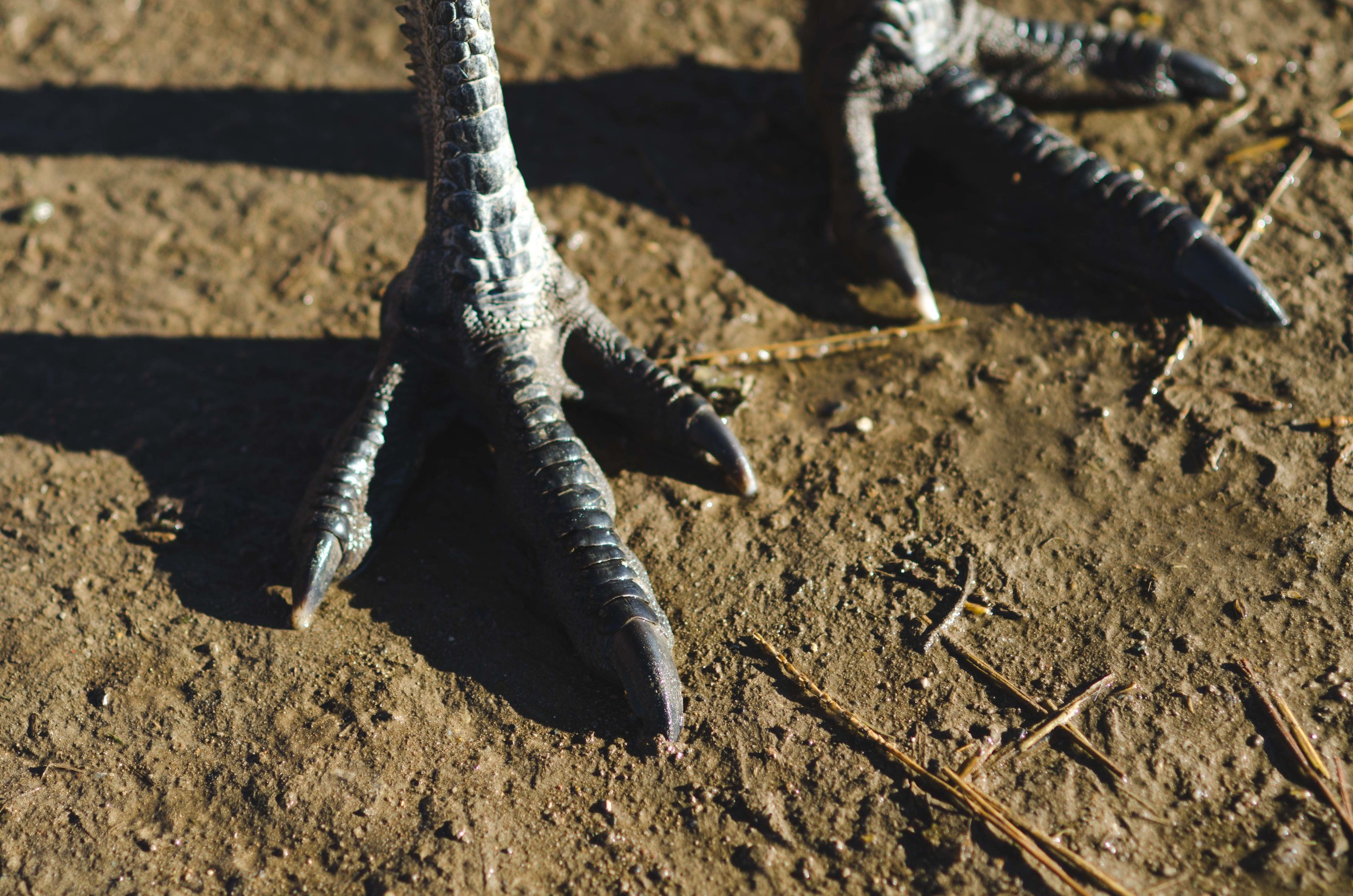 Emu feet