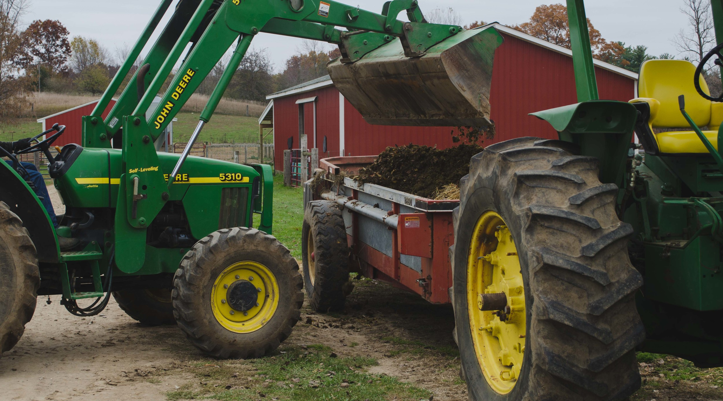 Filling the manure spreader, to be taken and spread out over a field