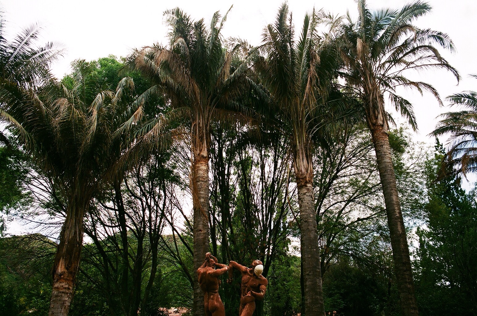 35mm film. taken in the Botanical Gardens of Cochabamba