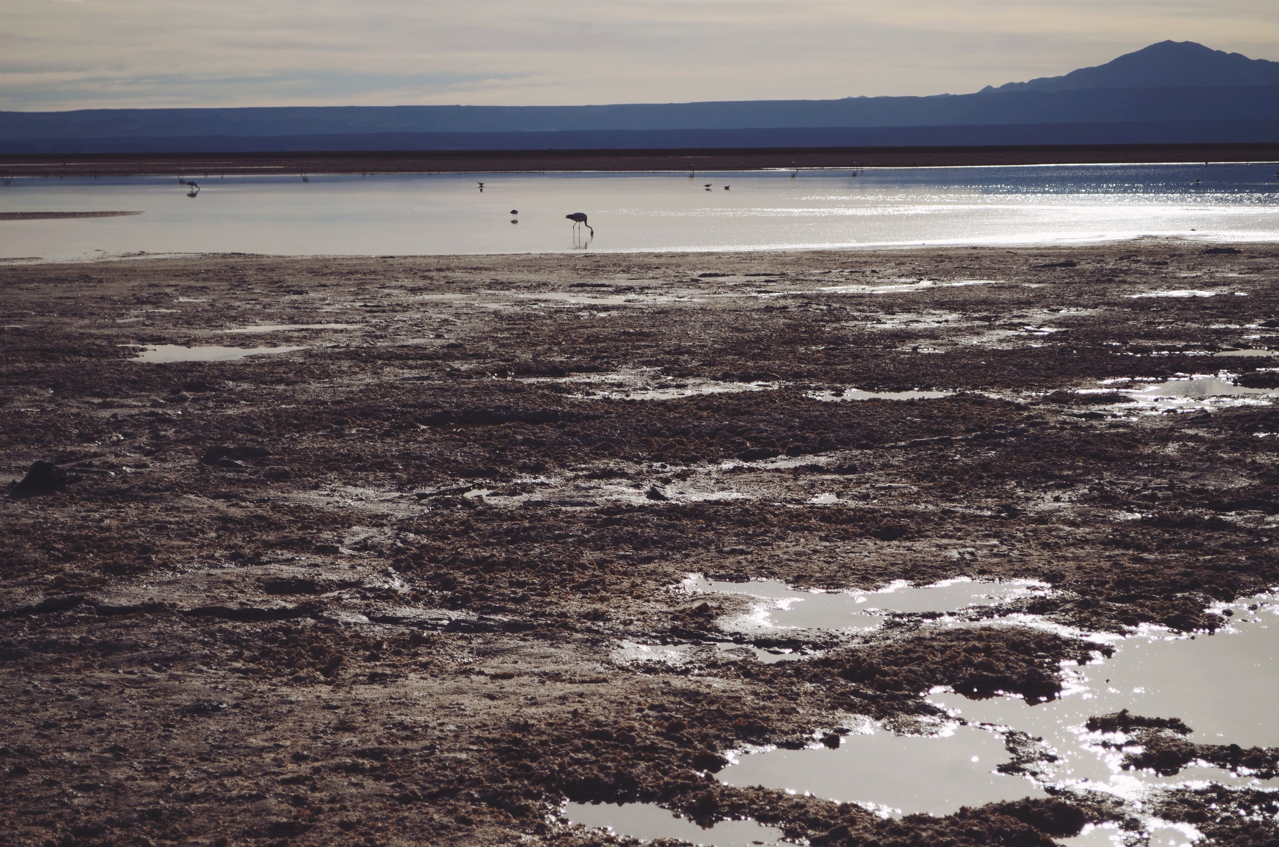 Chaxa Lagoon with flamingos // 17 abril 2015