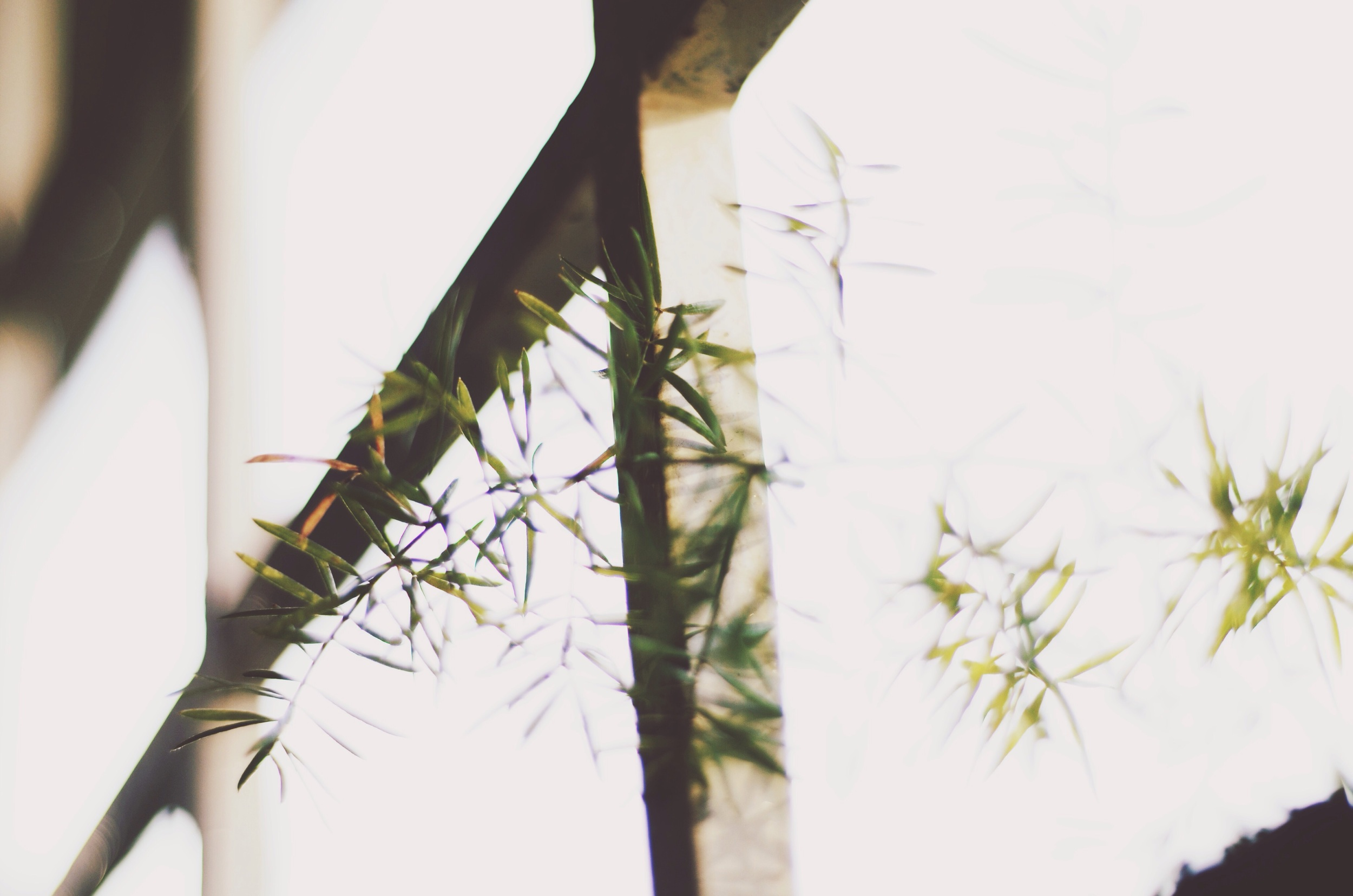 Window plants // 27 may
