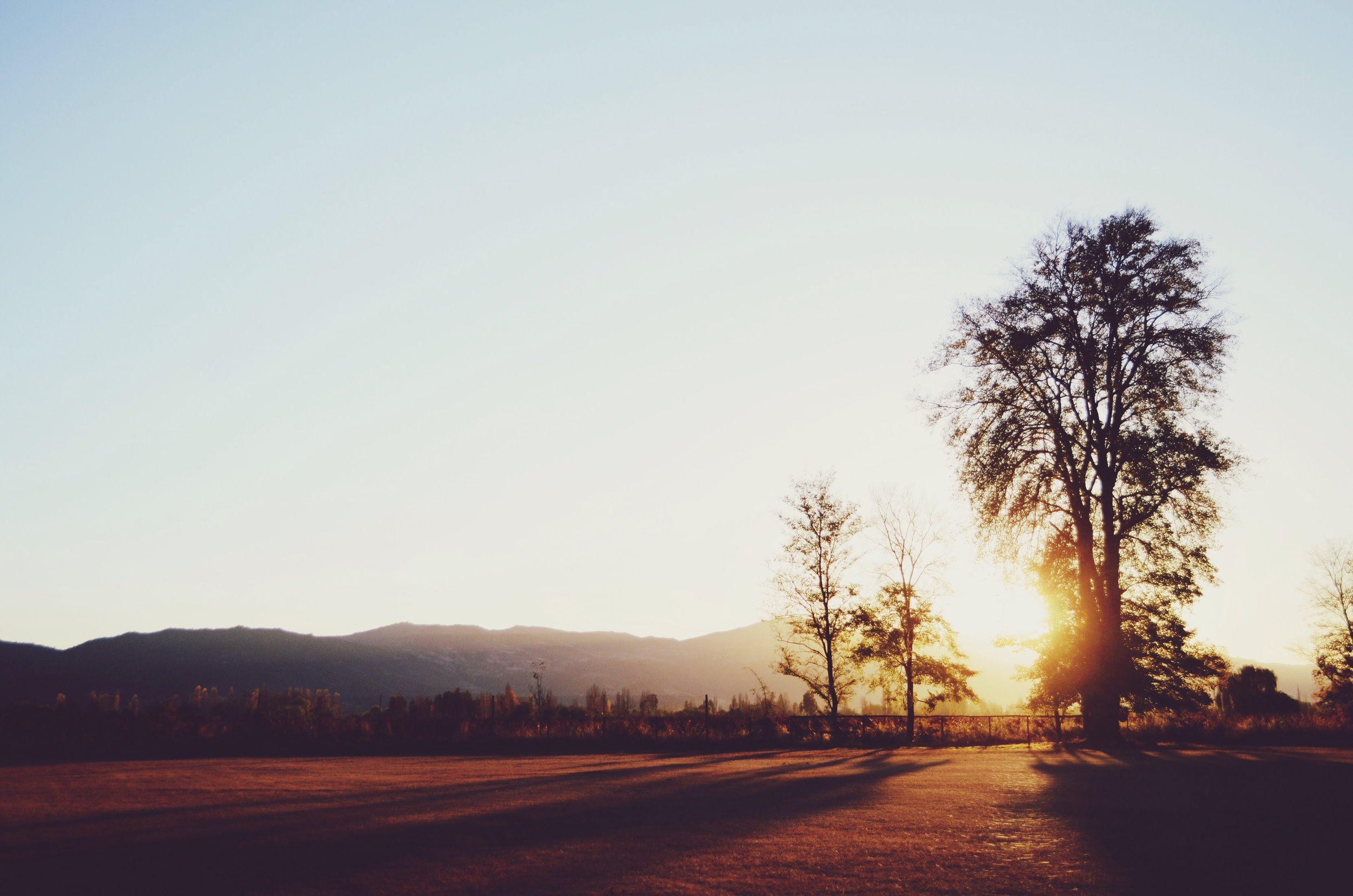 Sunset outside the vineyard // 29 may