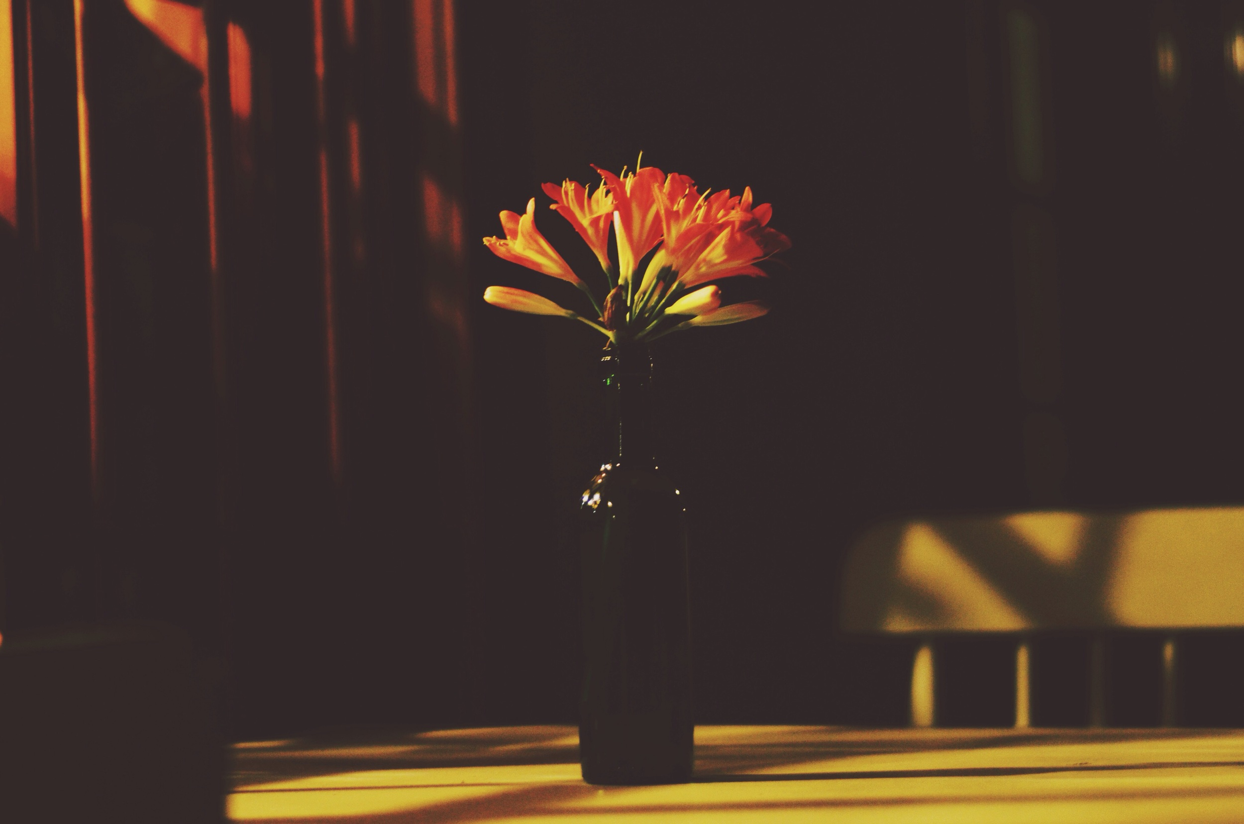 Vase of flowers in the shadows of the vineyard's shop lights // 29 may