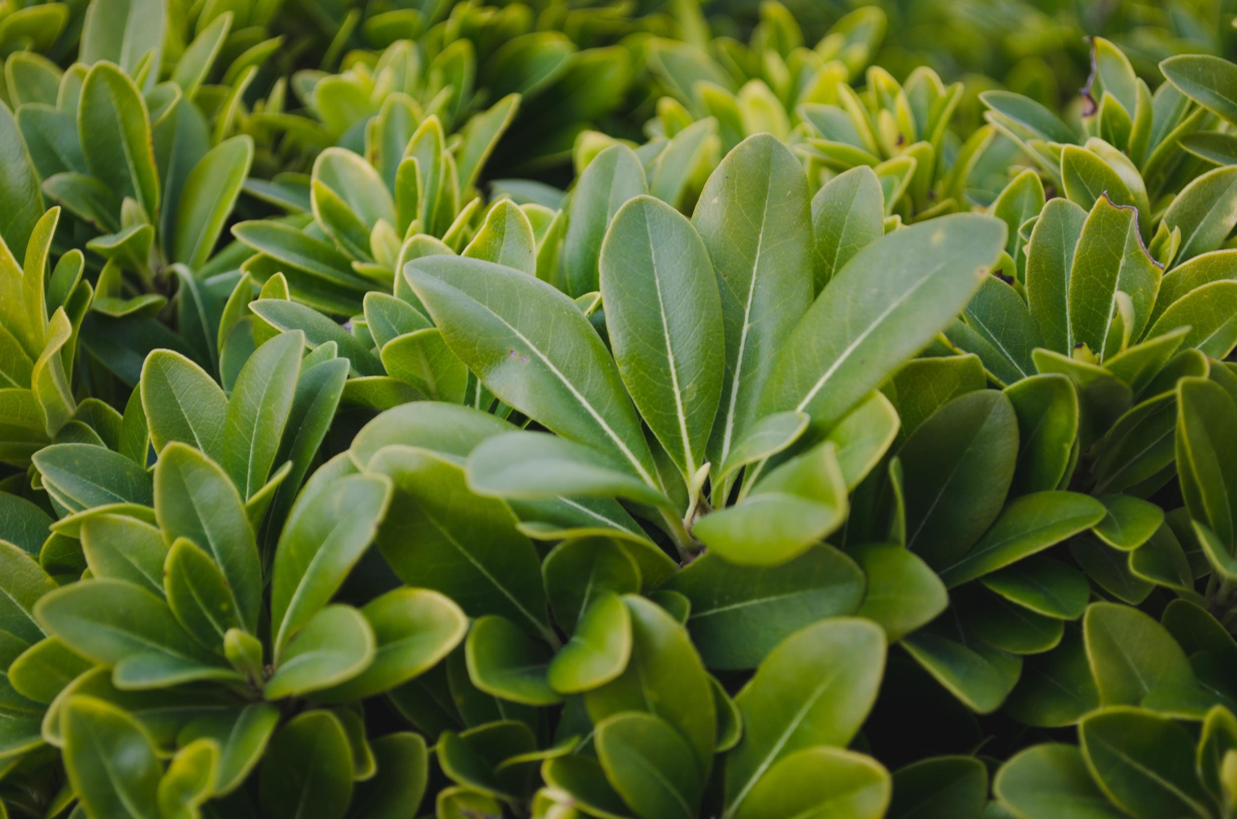 some sort of plant specimen in the ornamental garden
