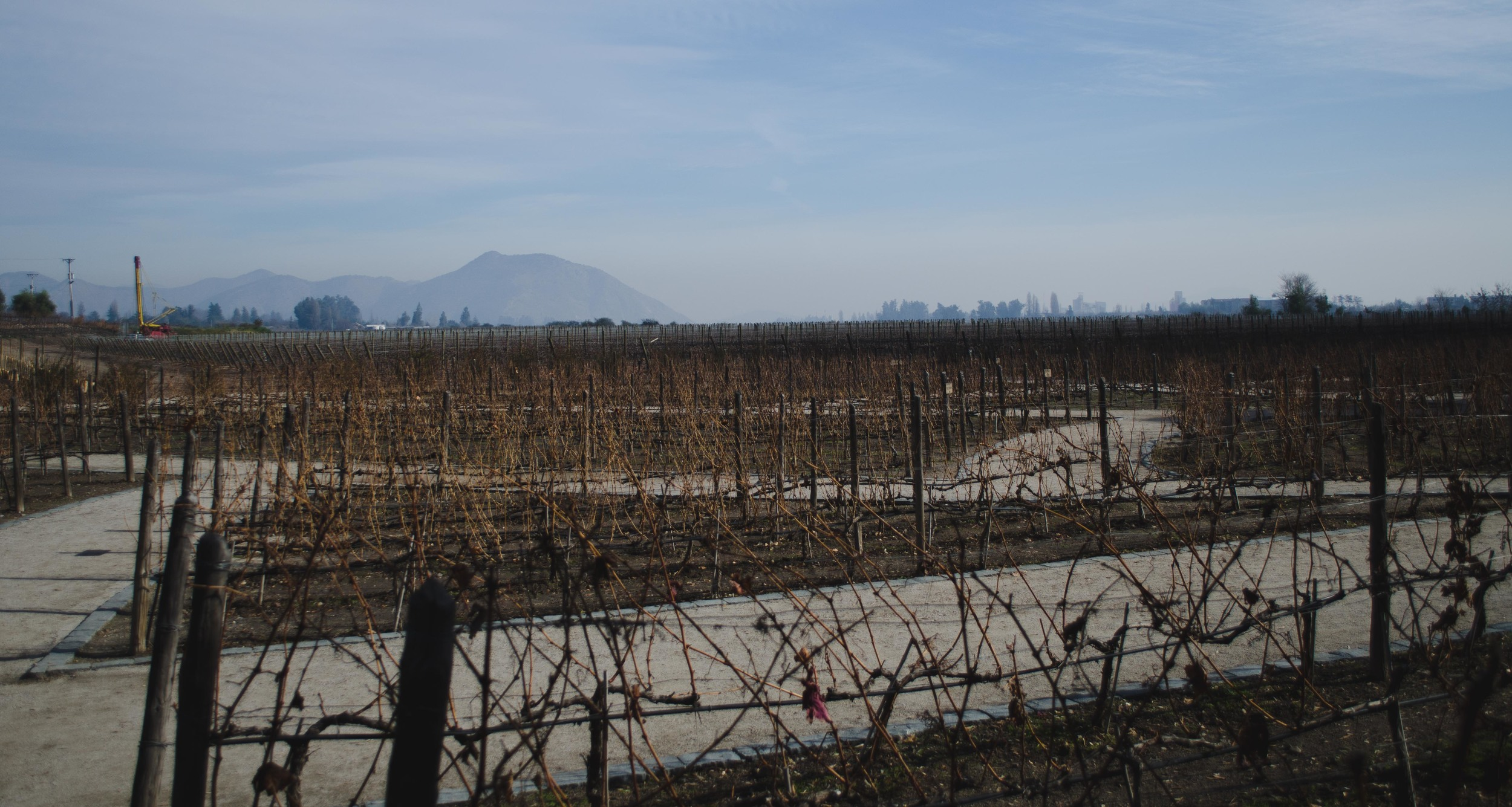 one of Concha y Toro 's many vineyards that make up their 10,000+ hectare production