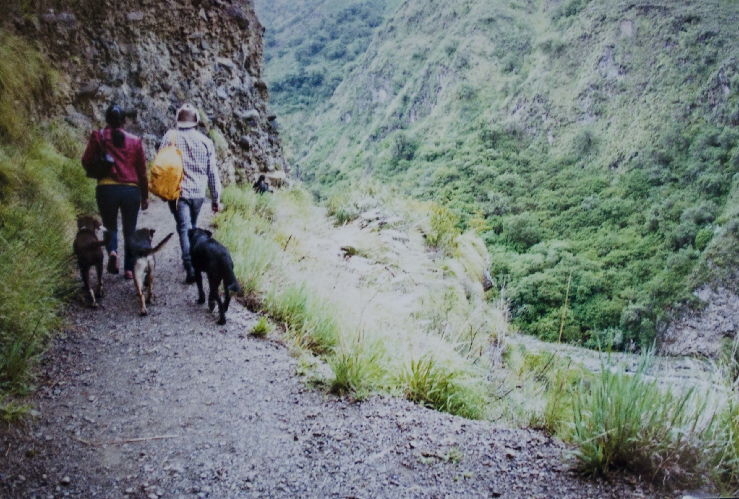 stray dogs accompany hikers to the waterfall // february 2015