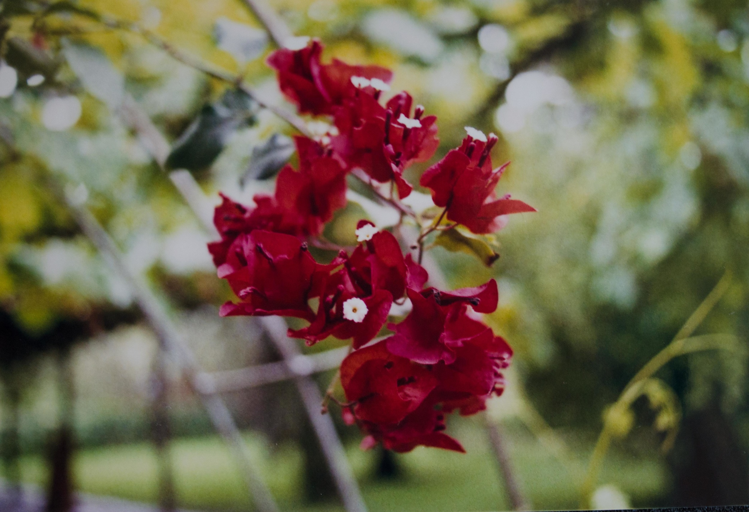 flower on a vine at the farm in Vinto // february 2015
