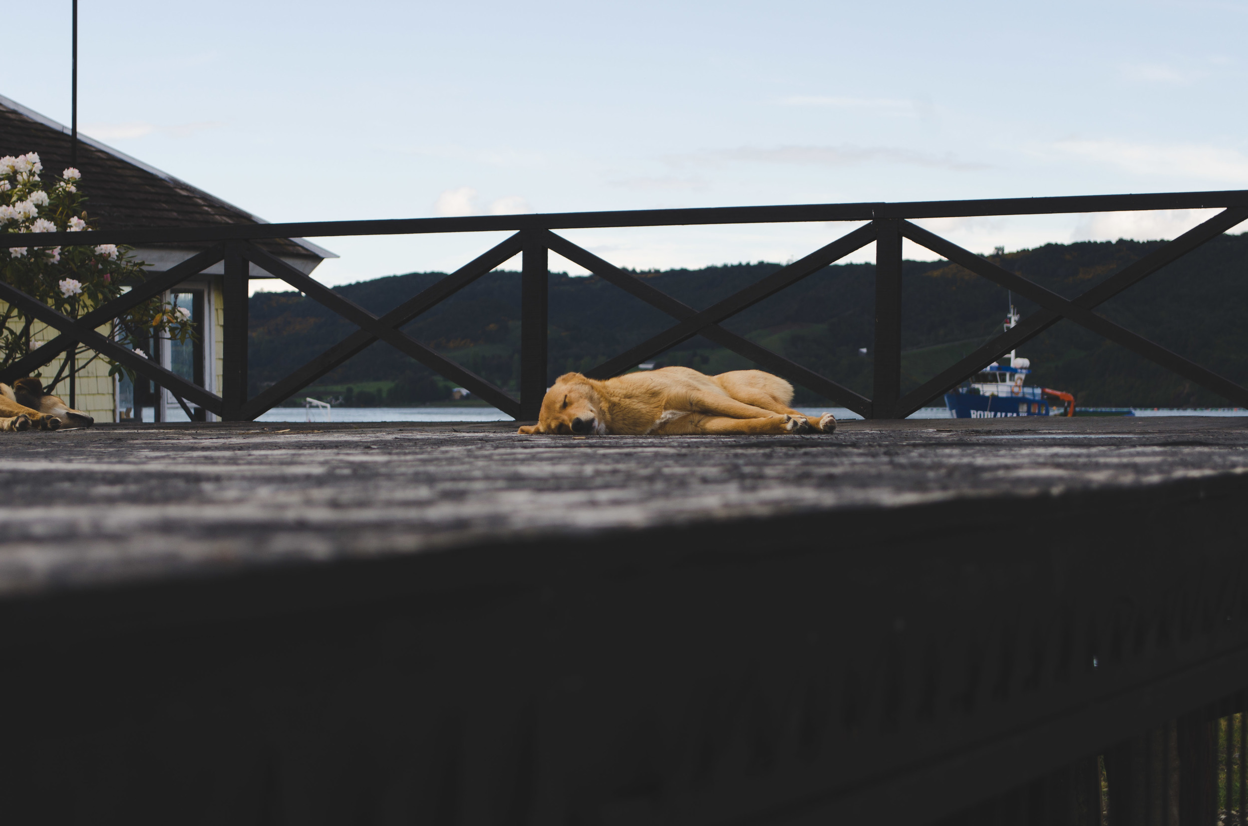 street dog napping by the bay