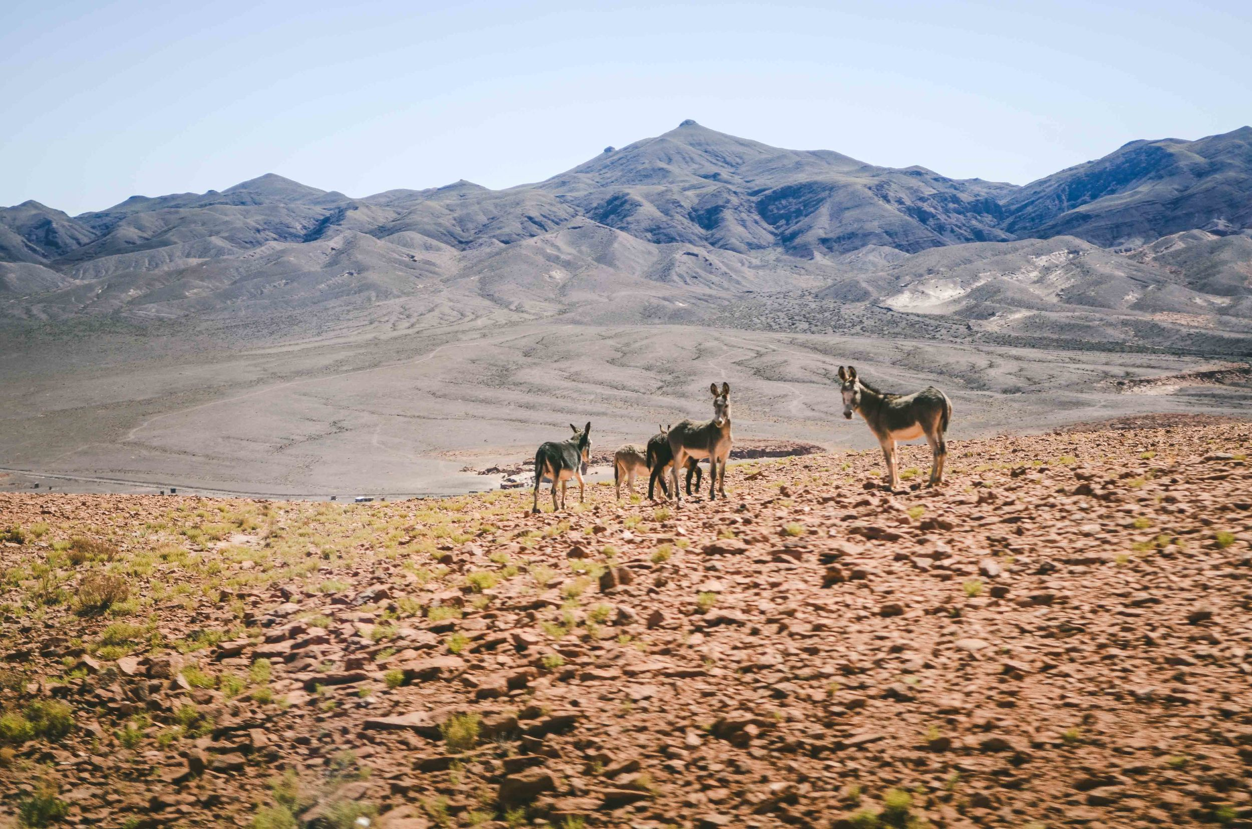 Chile-3722.jpg