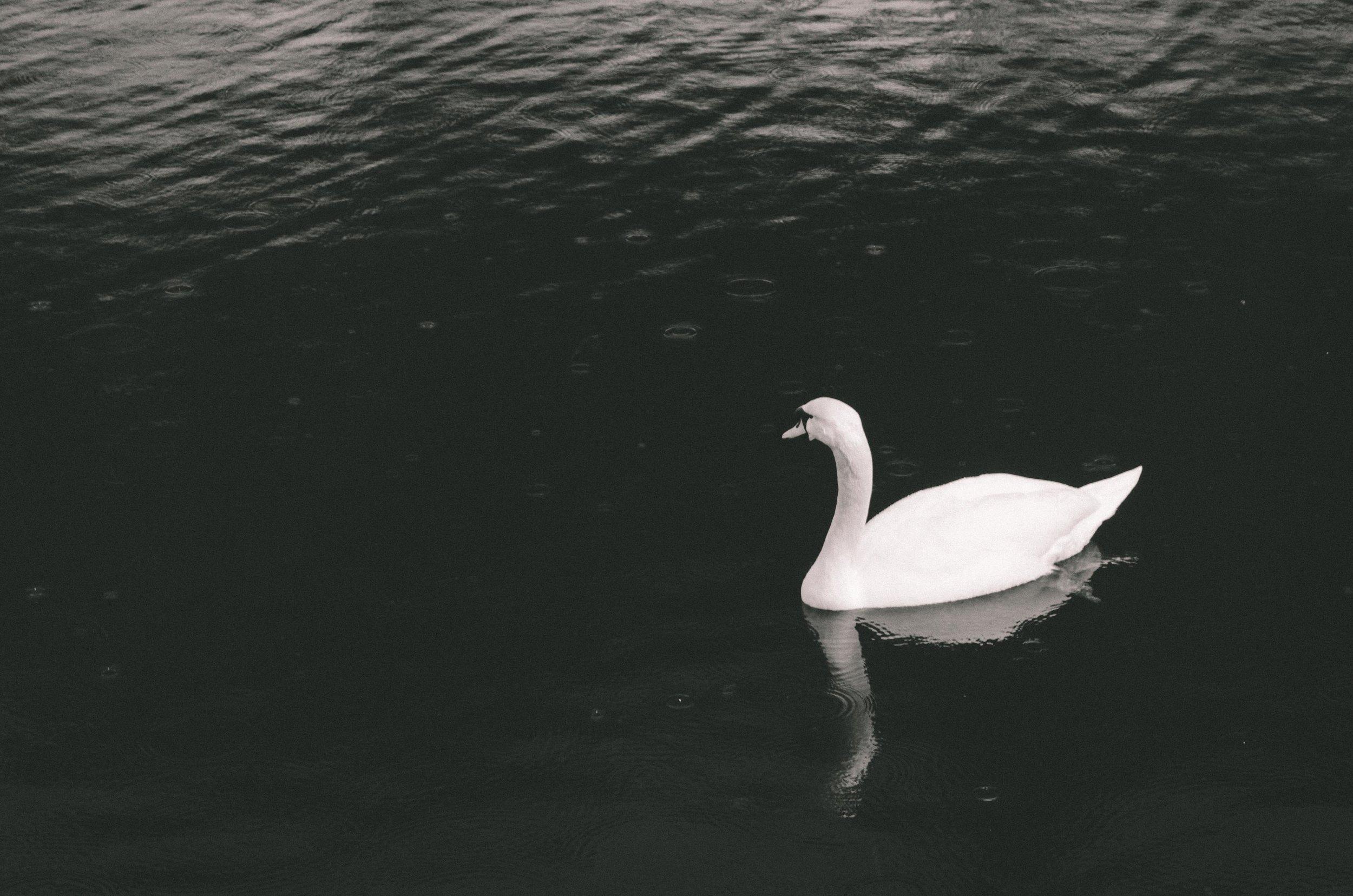 march 6 // Swan.