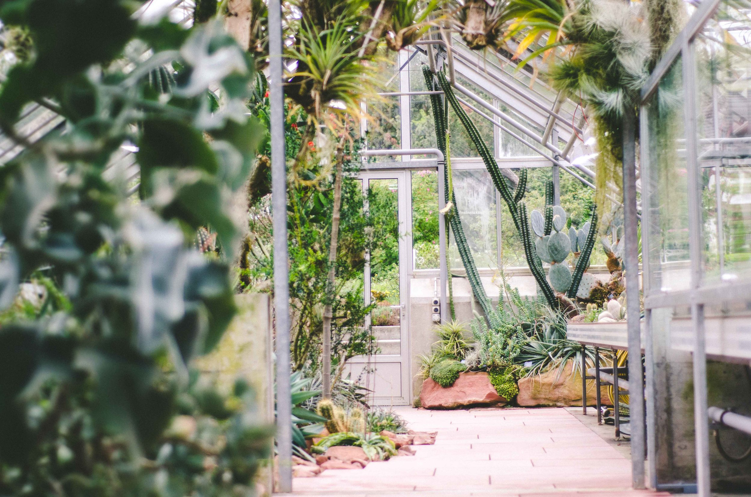Universitaet Basel Botanical Garden