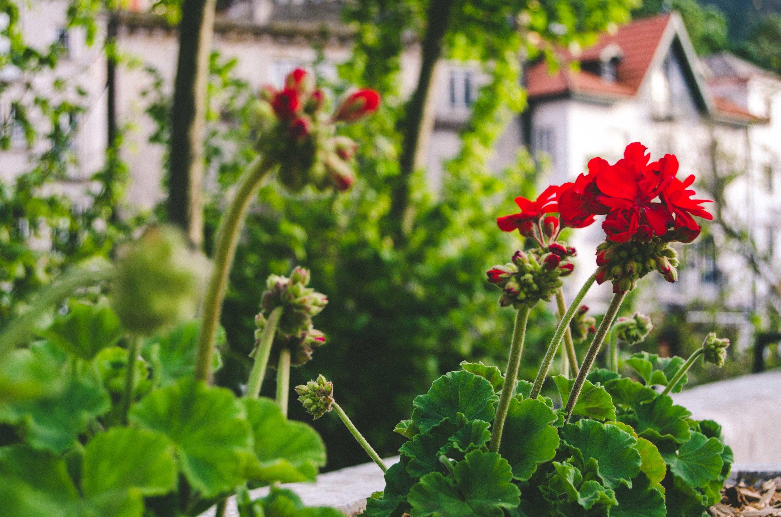schoenmaker_portugalblog-31.jpg