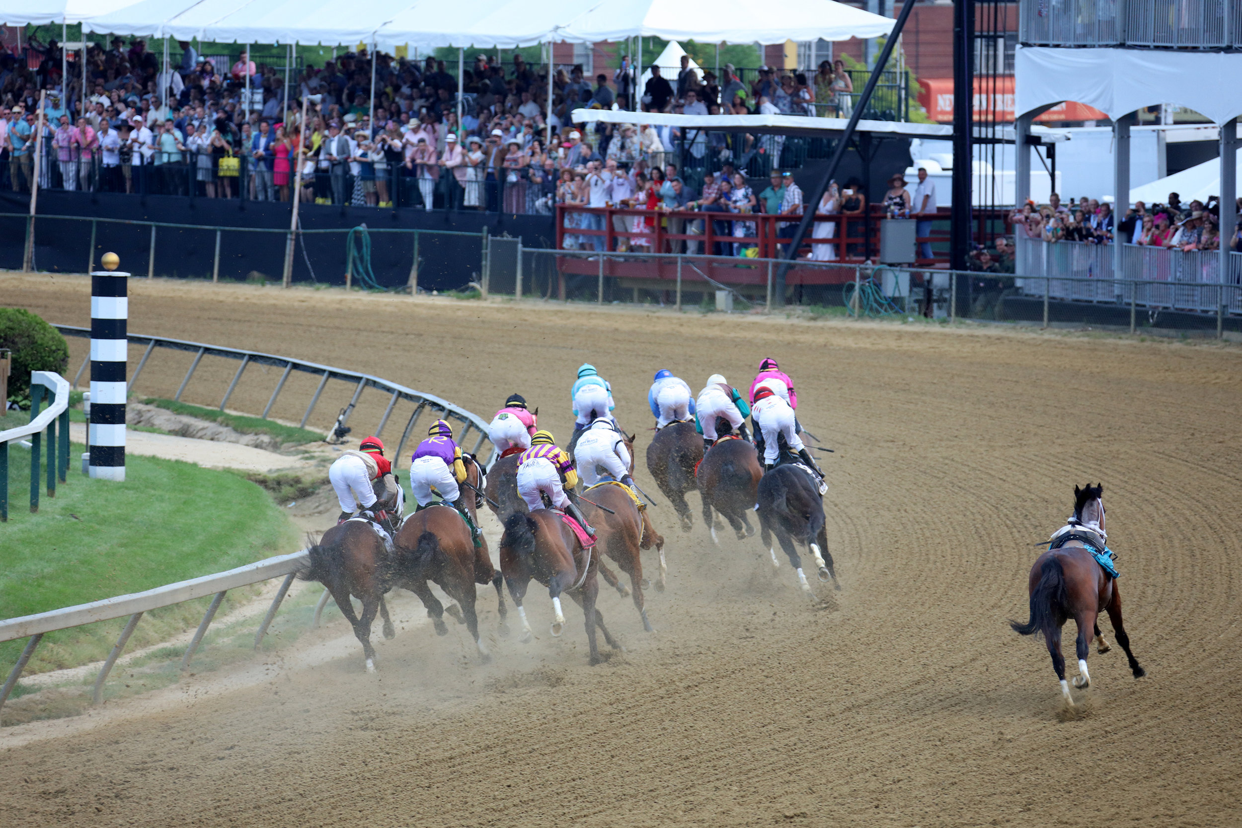 Rounding the first turn, Bodexpress (far right) goes it alone. There's something poignant and noble about that. Courtesy MarylandGovPics.
