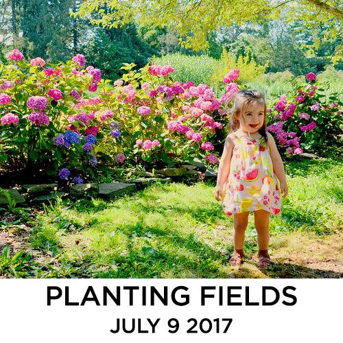 planting17.jpg