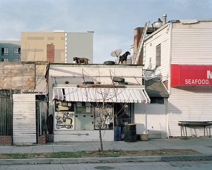 Dogs on Rooftop,  Georgia Avenue, Pleasant Plains, Wahington, D.C. 2012