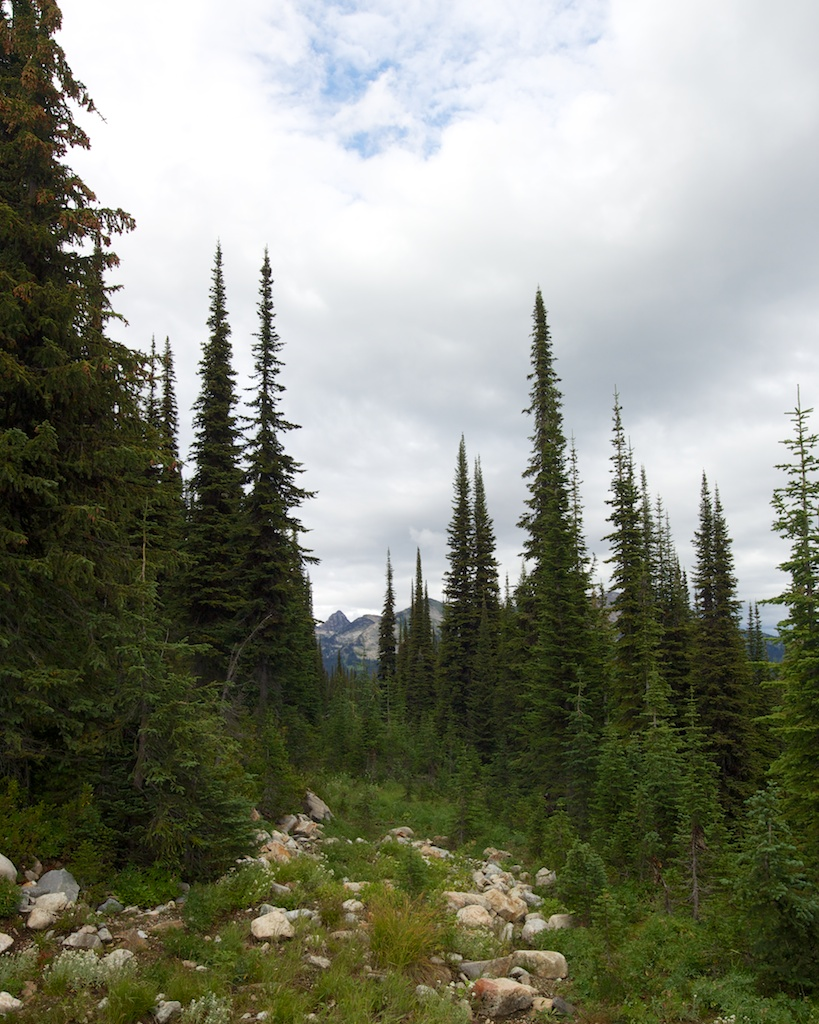 Mt Revelstoke National Park www.glutenfreetravelette.com