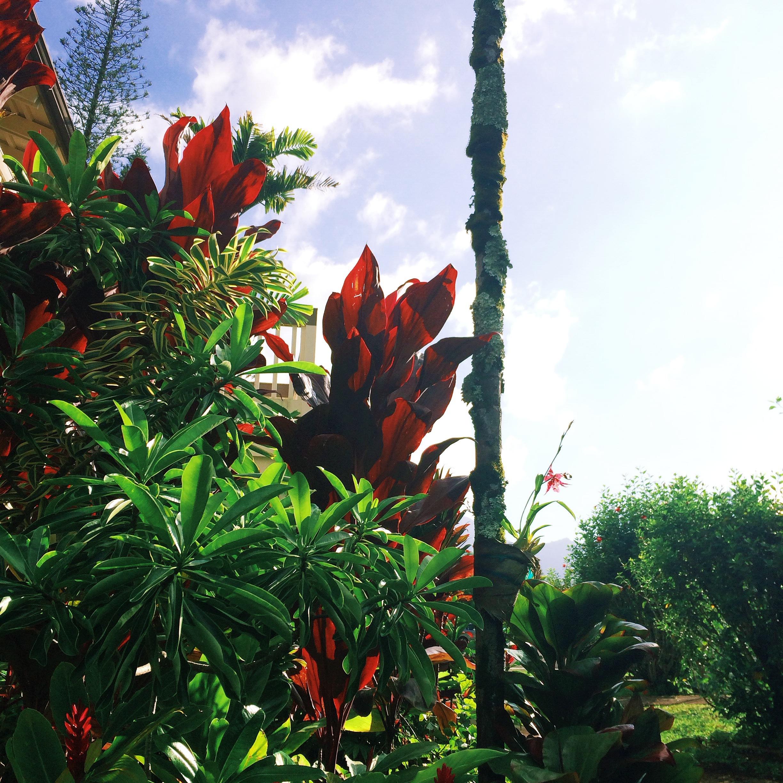 Beautiful Plants in Princeville, Kauai