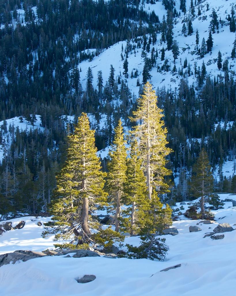 Tamarack Lake Hike off the Echo Lake Trailhead in the Desolation Wilderness