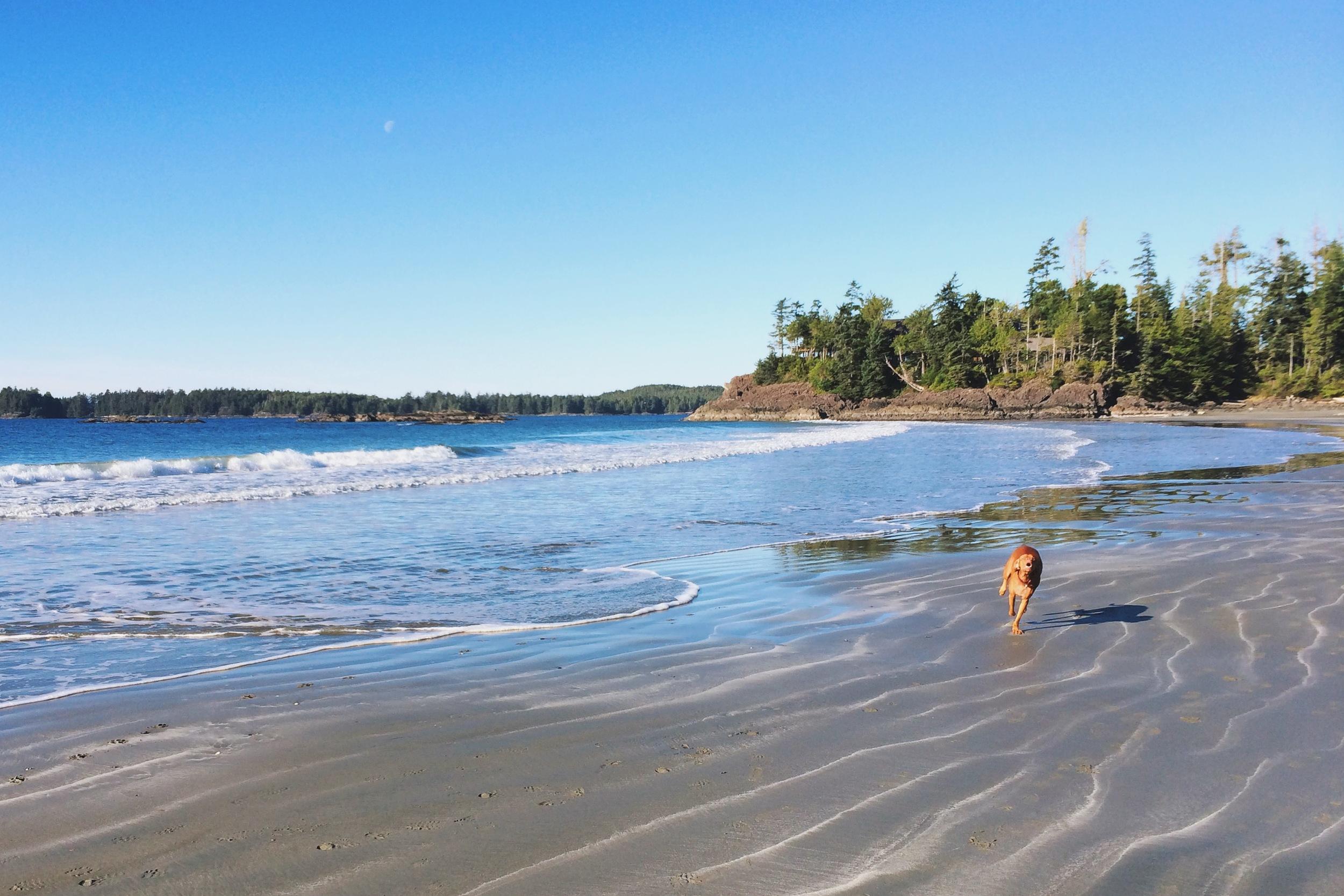 Mackenzie Beach Tofino