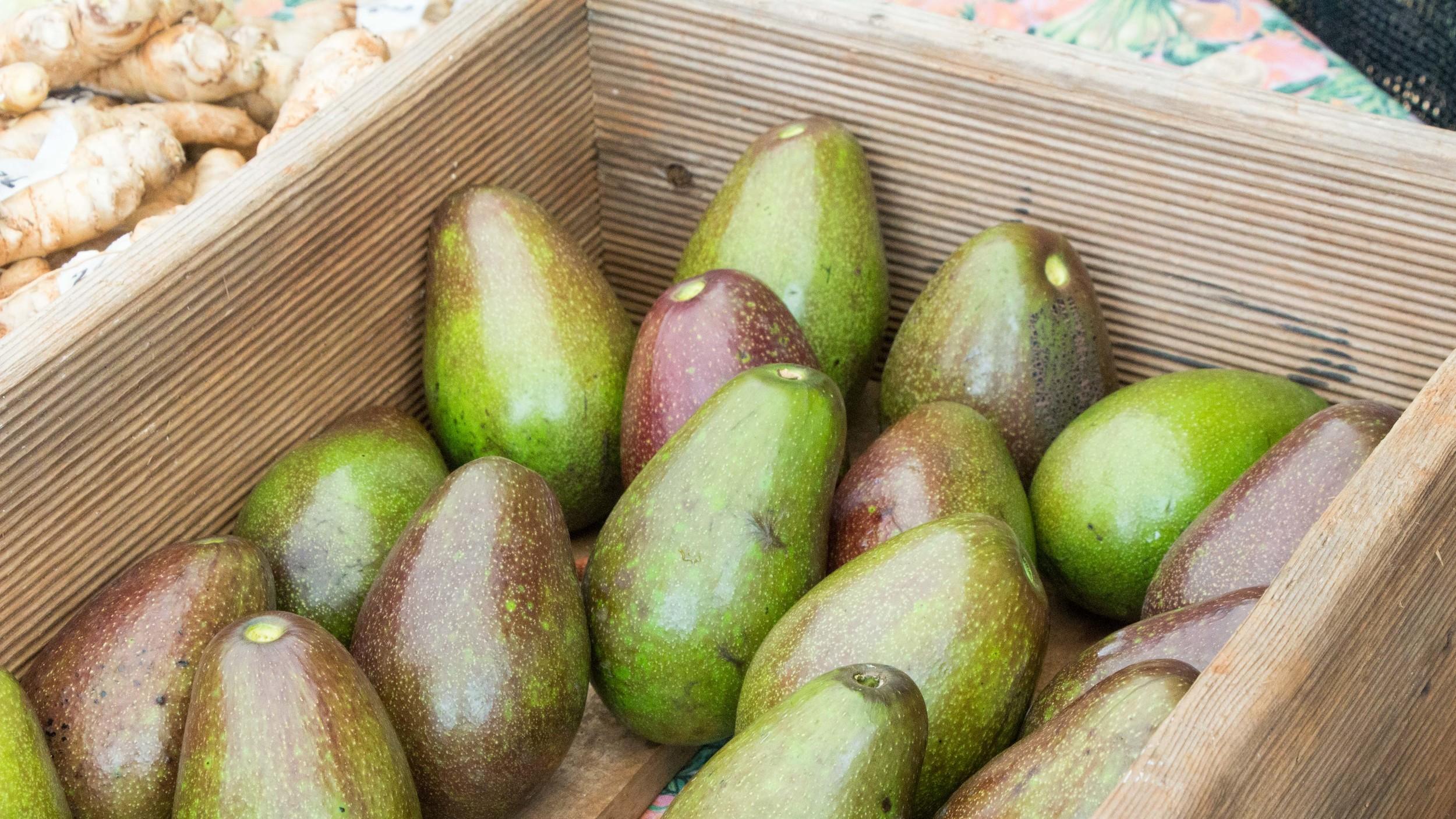 Avocados-1.jpg
