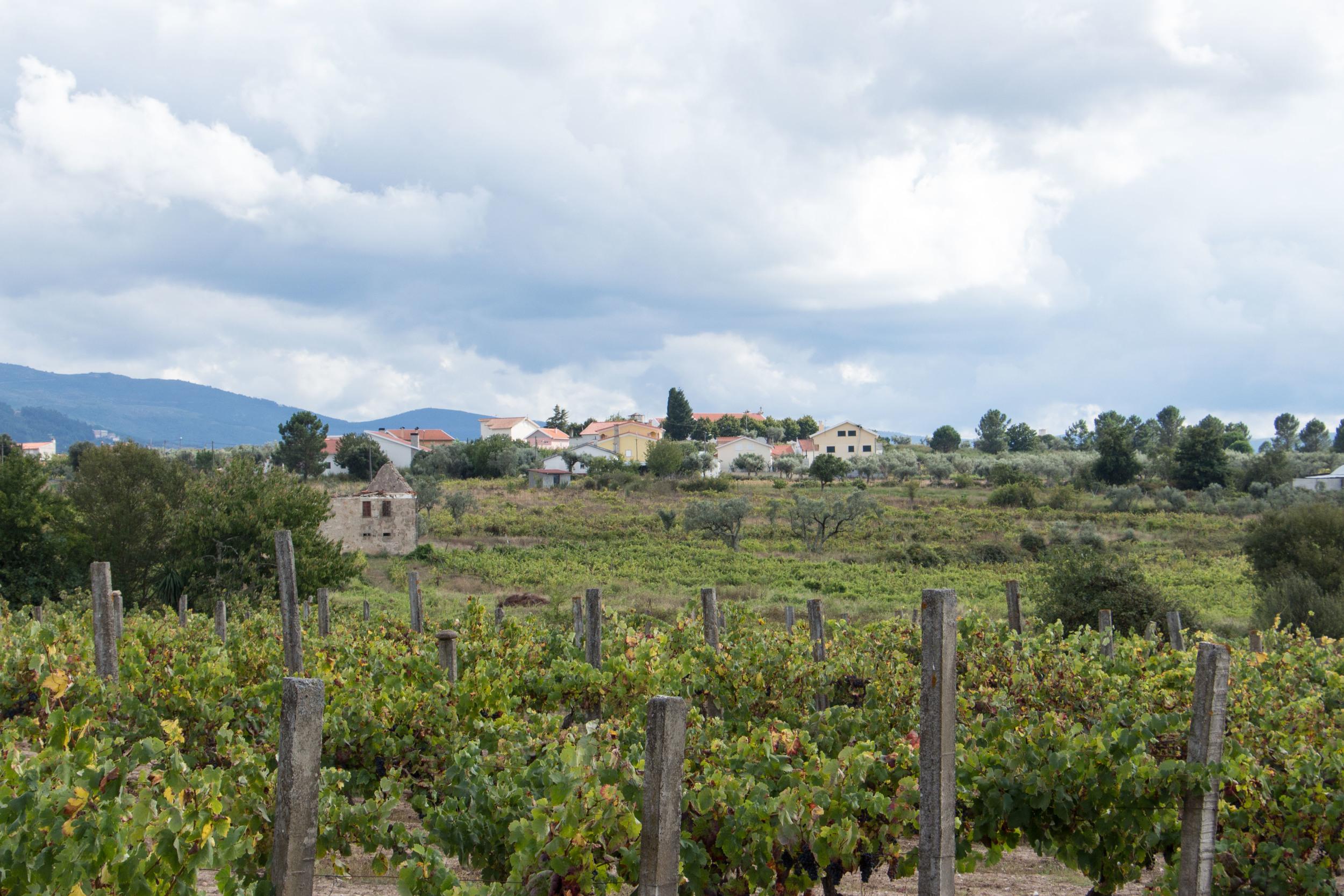 WanderLog_Portugal_Seia-1.jpg