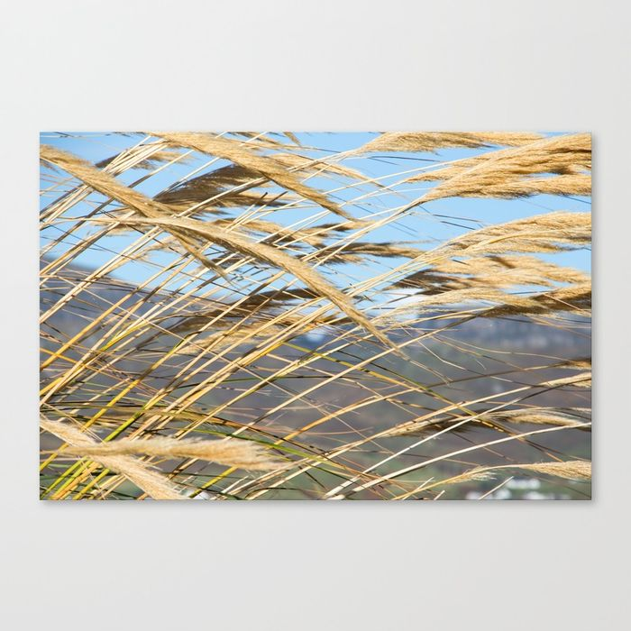 Society6_Canvas_Pampas.jpg