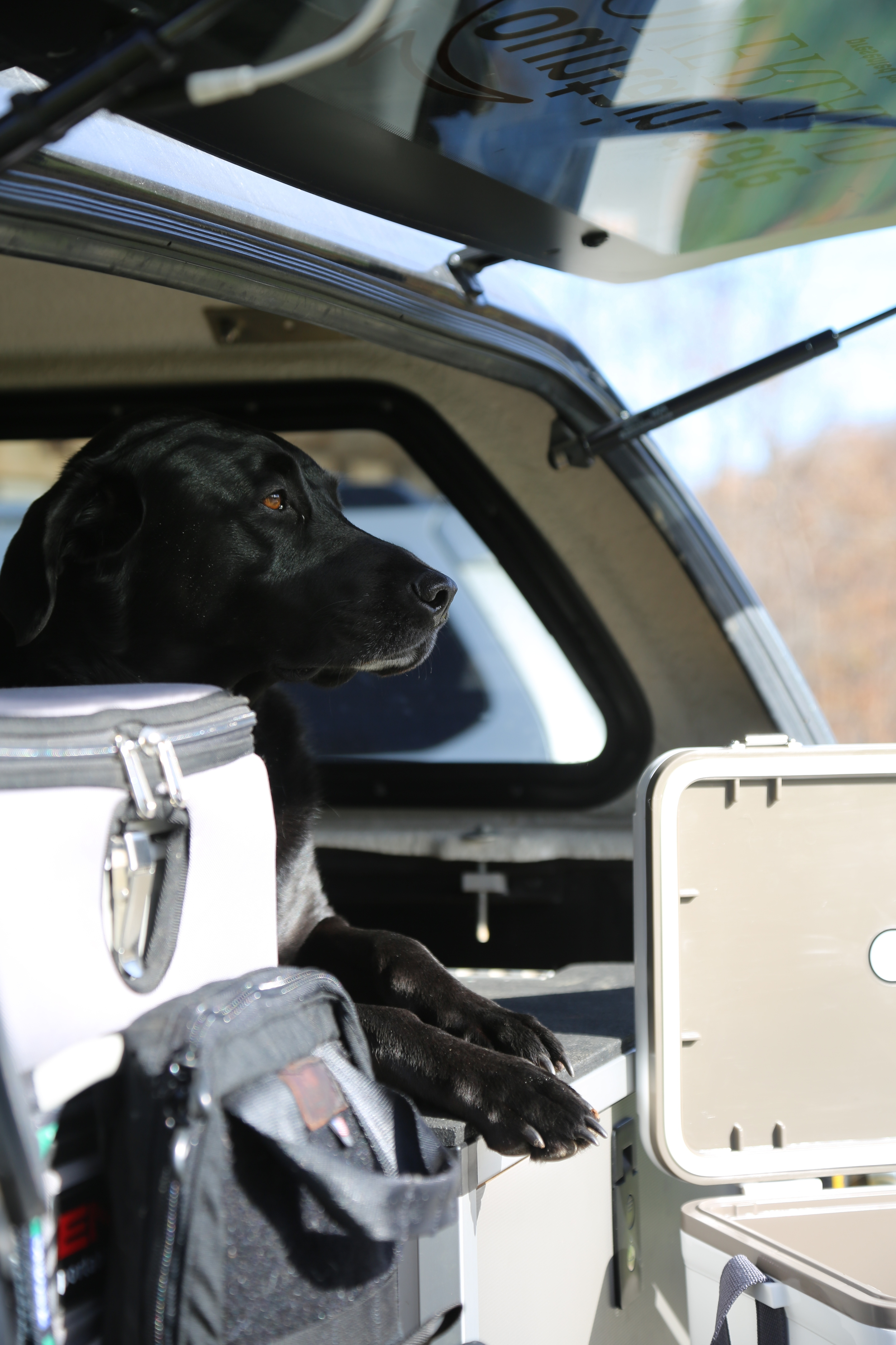 Dogs love  Goose Gear .