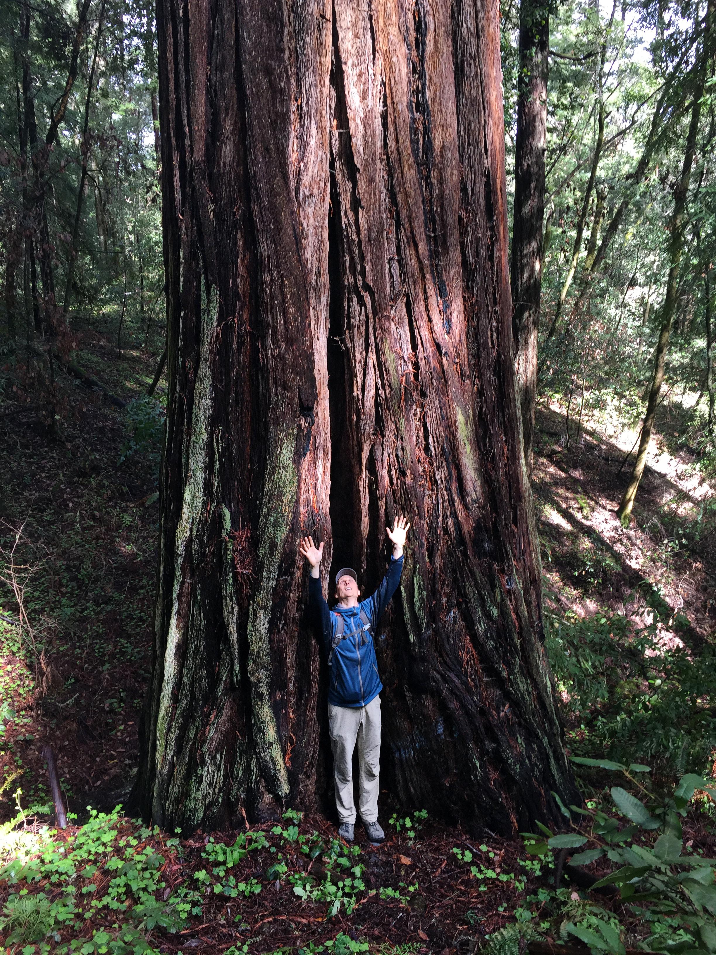 redwoodReaching.jpg