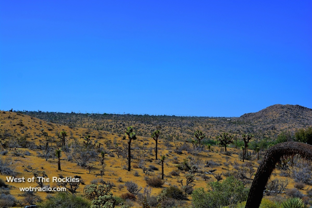 Joshua Tree National Park, home of the JTRC.