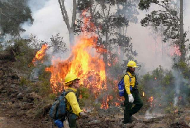 """Above:""""Federal, state, and county firefighters teamed together to suppress a wildland fire burning through ohia forest in Kealakekua mauka in late 2009 and early 2010."""" Credit - National Park Service/Al Aviles"""