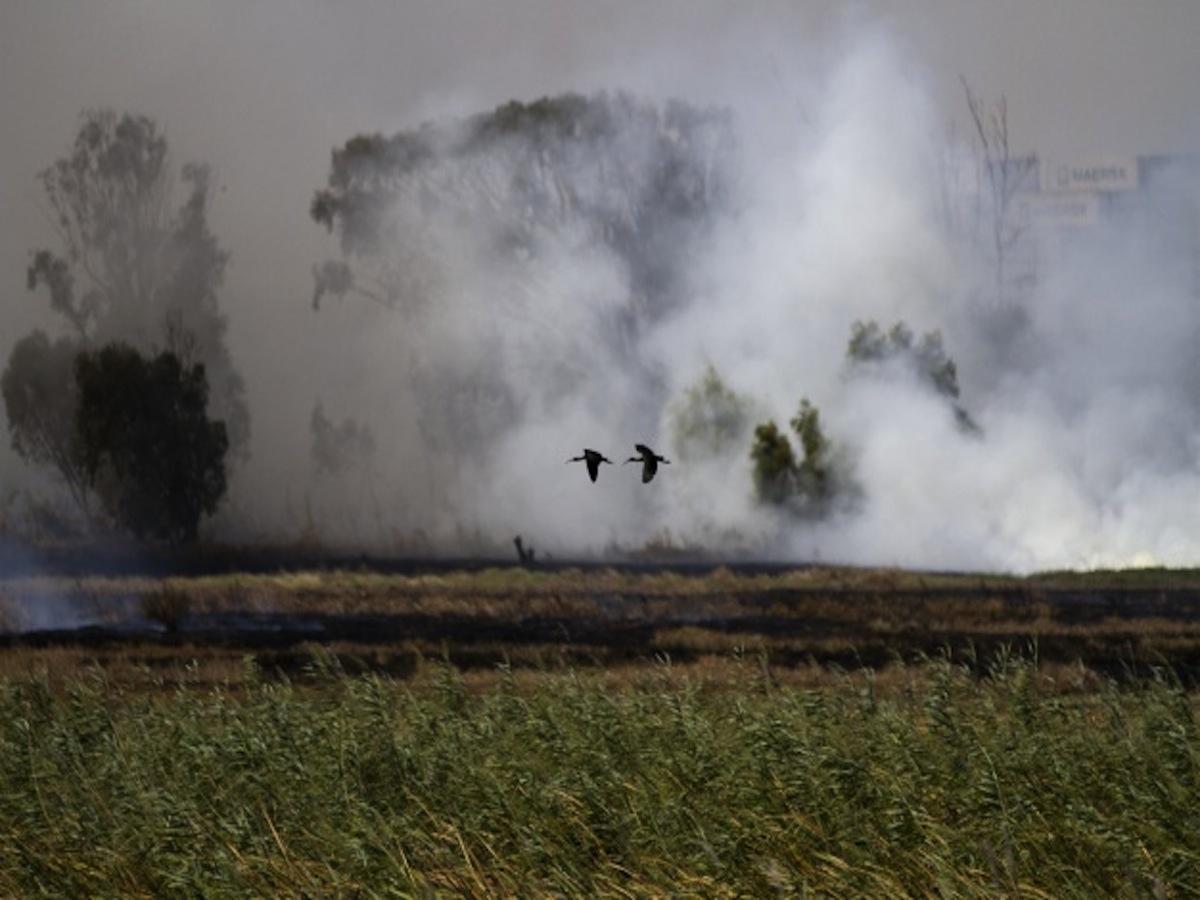Nene fly away from fire.jpg