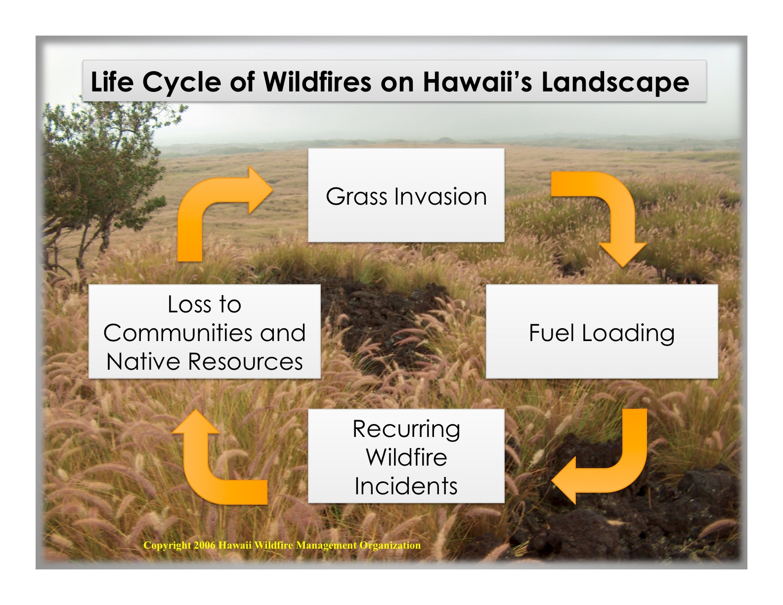 Grass Fire Cycle in Hawaii