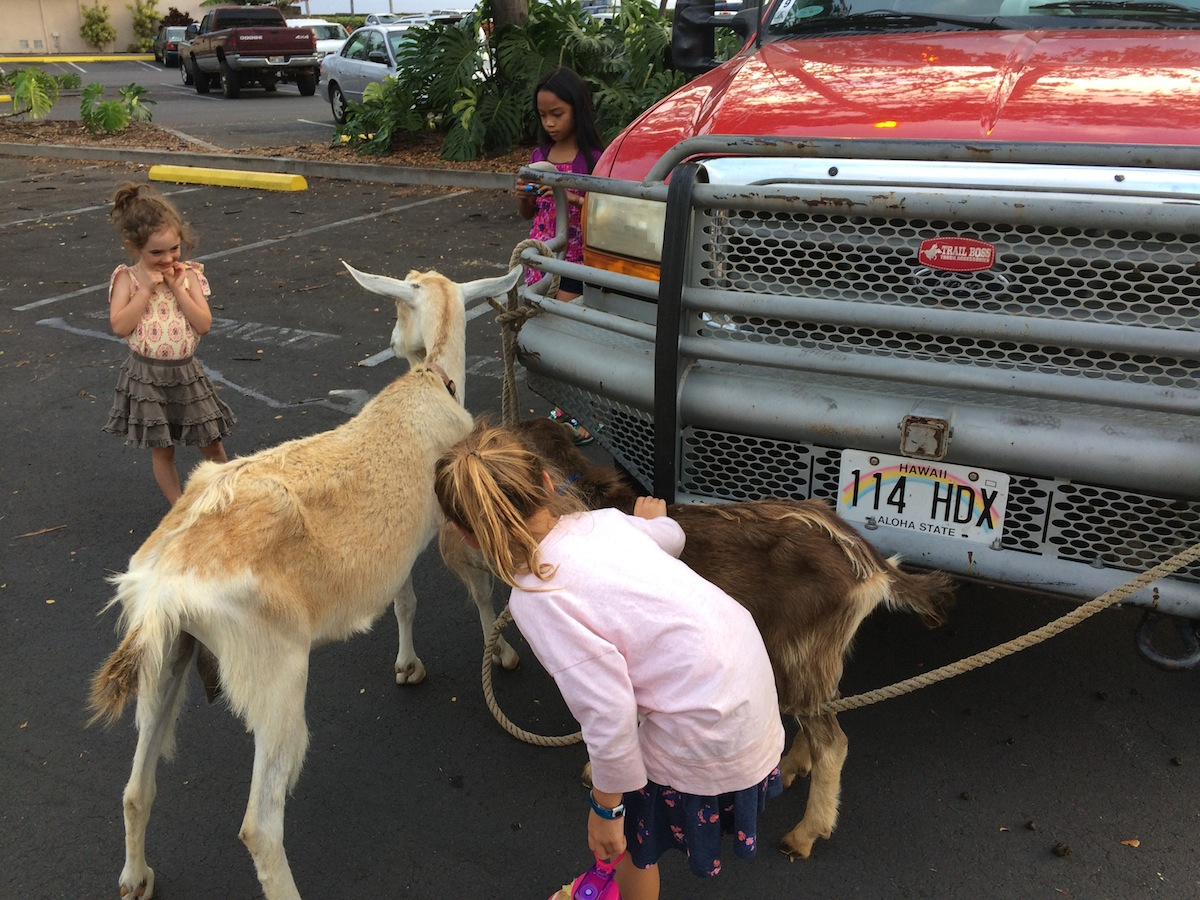 Goat Dozer Petting Zoo helped us connect kids to the idea that goats can reduce wildfire hazards around communities.