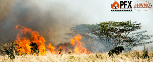 """Wildfire. Photo credit: University of Hawai'i College of Tropical Agriculture and Human Resources"""