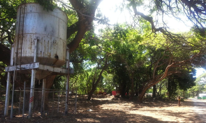 Olowalu Fire Mitigation Project 2015 N3Z After - North End.png