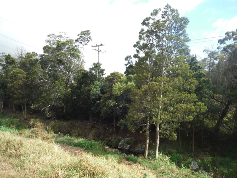 Ke Ala Kahawai O Waimea Streamside Trail of Waimea, after fuels reduction.