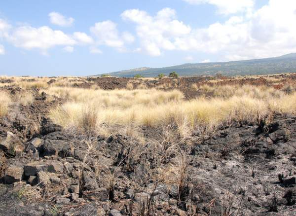 """Charred earth from the recent fire near Palamanui is seen along side of dry grass from the persisting drought in North Kona. (Laura Shimabuku/West Hawaii Today)"""