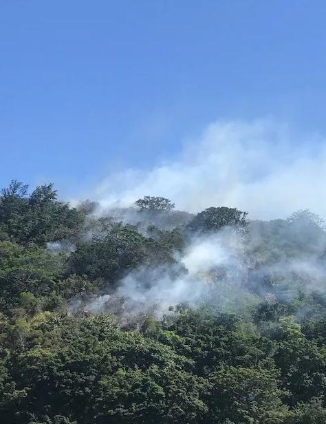 """Honolulu fire responded to a brush fire in Waimea Valley on Tuesday. (Image: Sunny Platt)"""