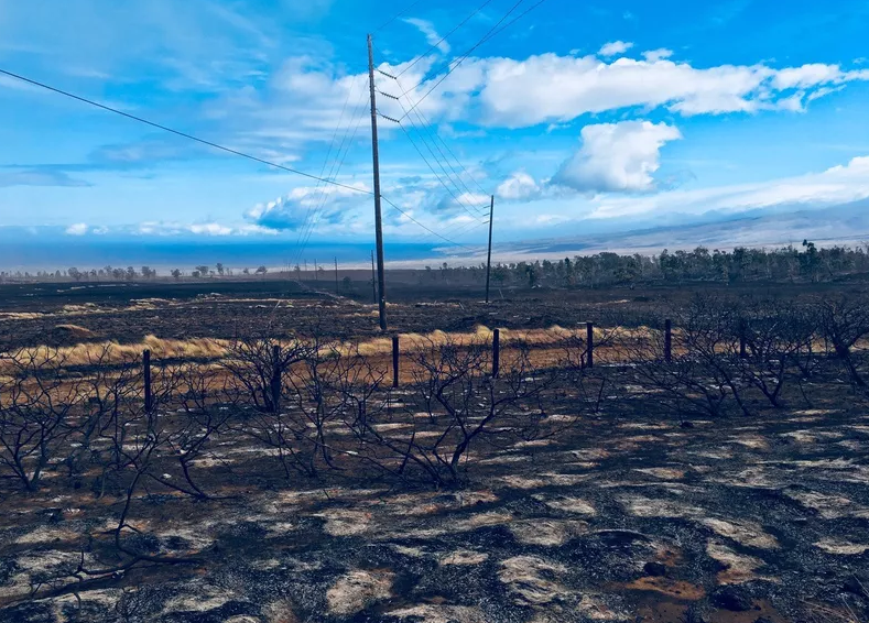 Scorched brush is seen after a brush fire moved through Waikoloa. Credit: Bert Horikawa / Hawaii News Now