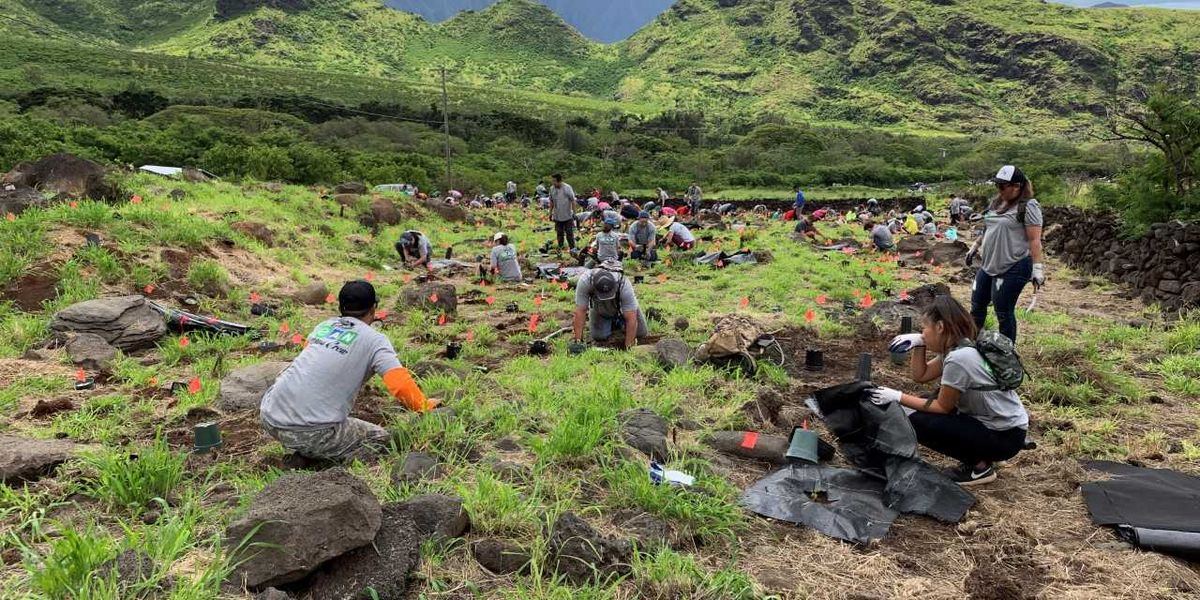 """Dozens of volunteers got down and dirty to plant roughly 750 trees on Oahu's west side."" Credit: DLNR."