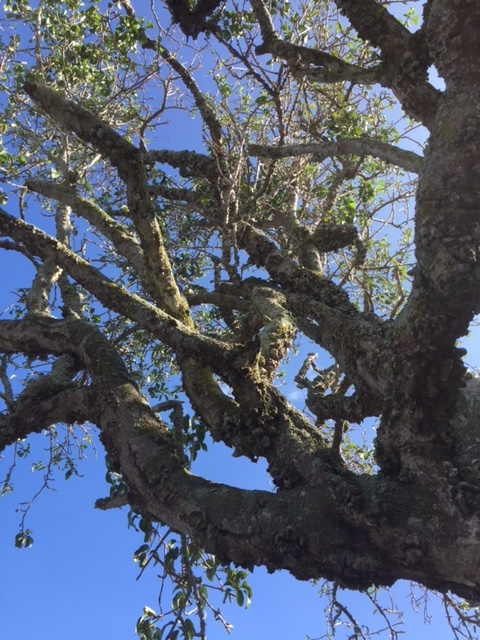 Aiea native preserve area. Credit: Liana Macdonald-Kainoa, Nāpuʻu Natural Resource Management