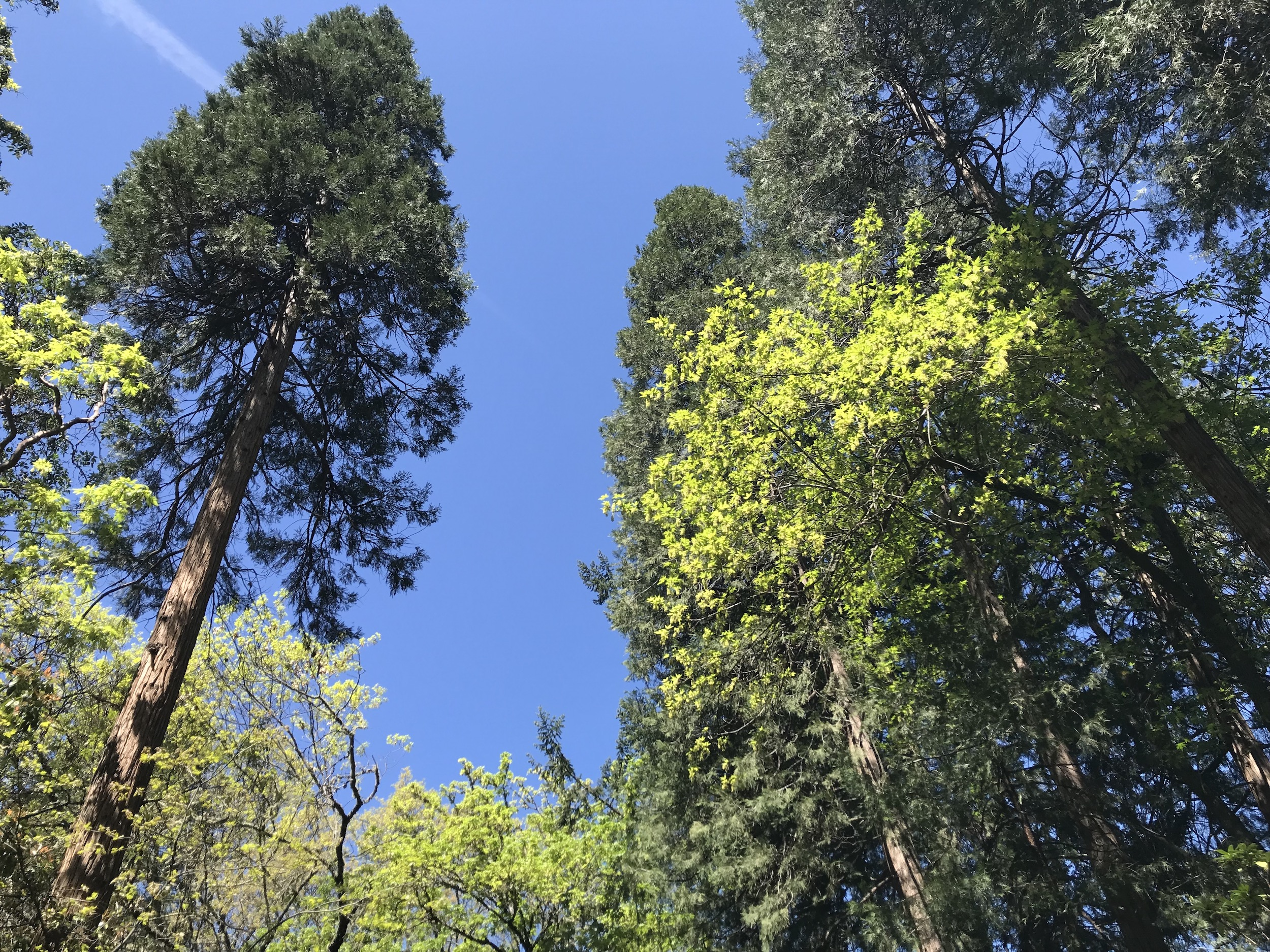 Biodiverse canopies.