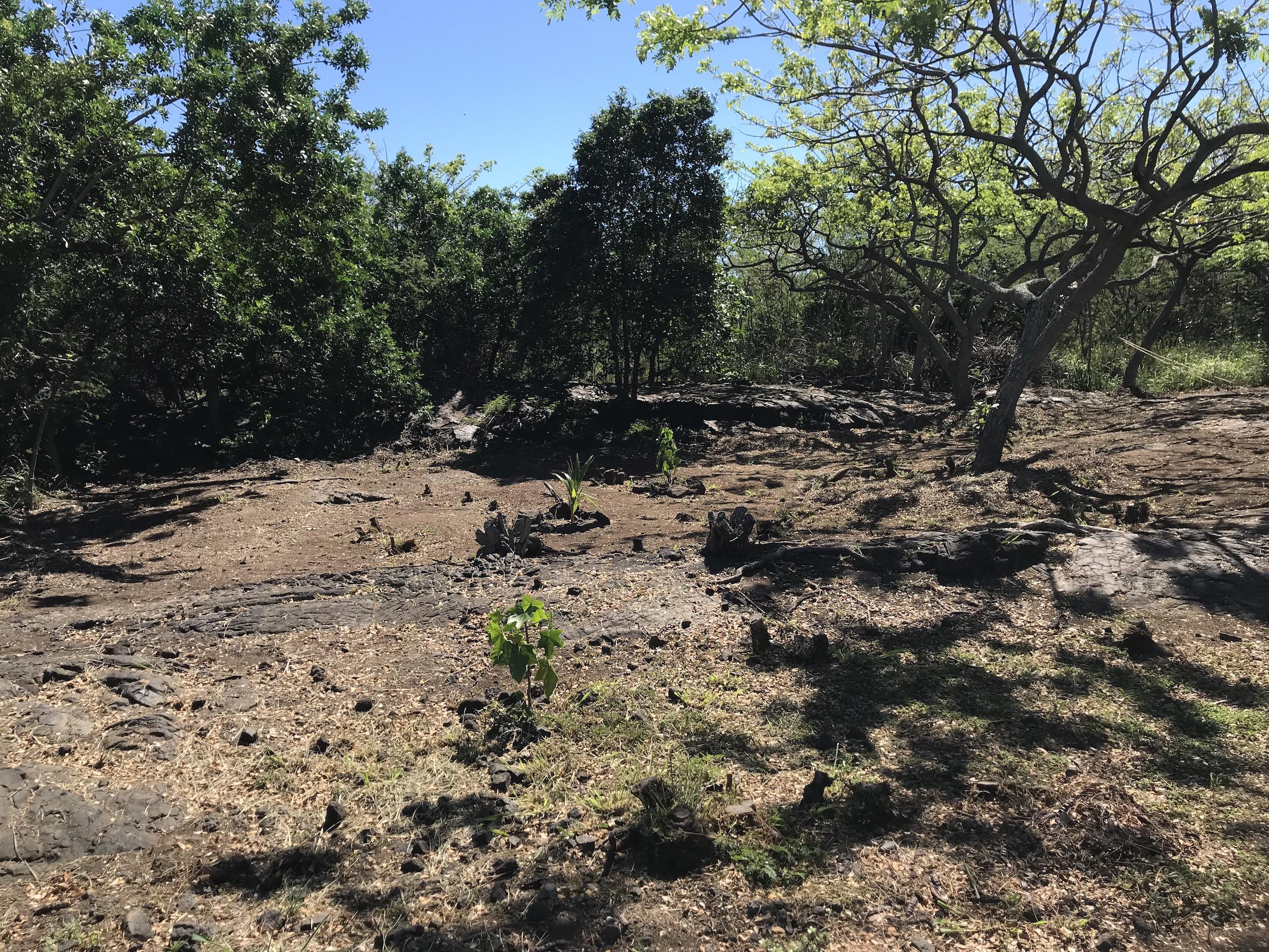 Wildfire Prep Day at Kawa_5_11_19_1.jpg