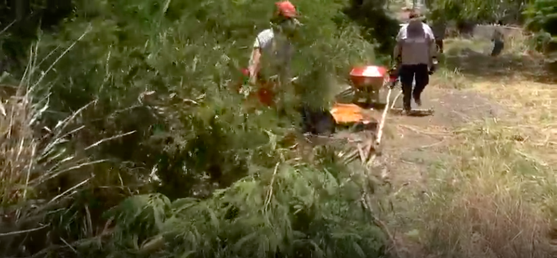 Team Rubicon volunteers out in full force to help create a firebreak. Credit: Hawaii News Now