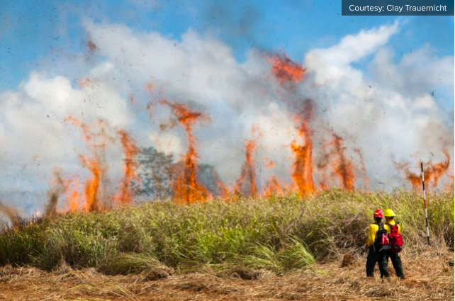 Wildfire researcher Clay Trauernicht says the African grasses and shrubs that have taken over Hawaii's ag lands need to be managed to control wildfires.